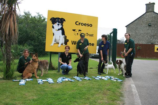 Dog Rescue Kennels In Bridgend