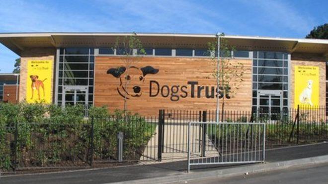 Dogs-Trust-Glasgow