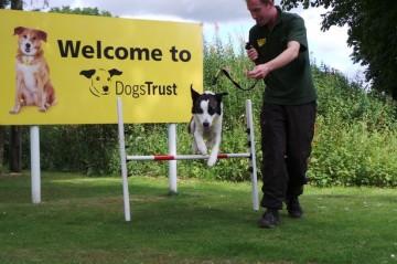 Dogs-Trust-West-Calder