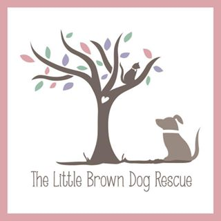 Little-Brown-Dog-Rescue
