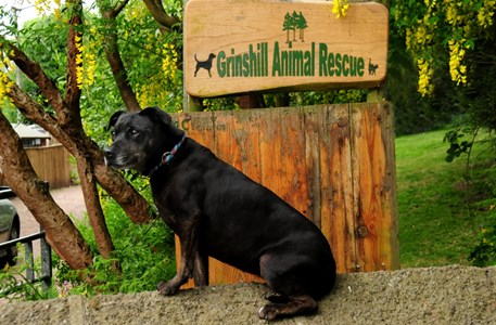 grinshill-dog-rescue