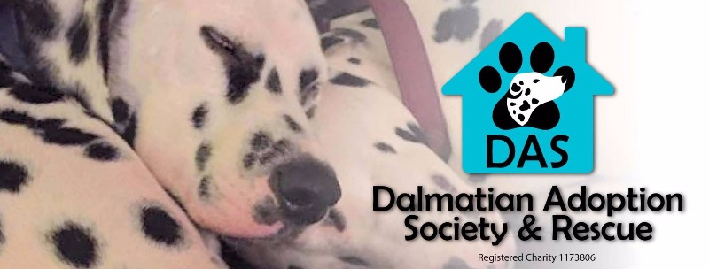 Dalmation-Adoption-Society-Rescue