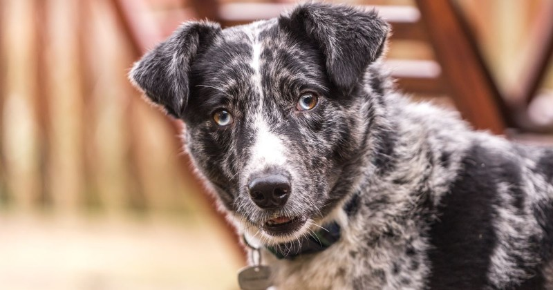 moorlands-dog-rescue